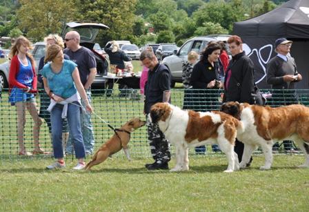 Dog Agility Training Basingstoke