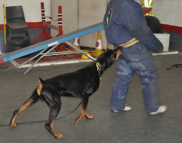 K Matters Dog Training